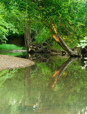 Peaceful Pond Poster by Douglas Barnett