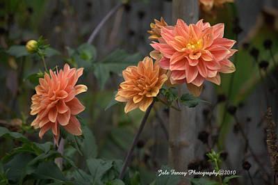 Peachy Petals Poster