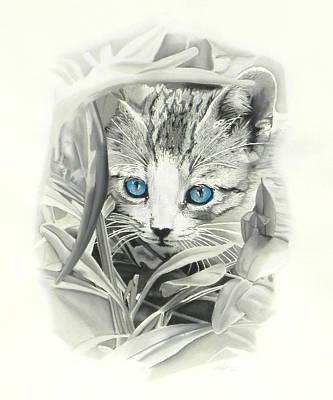 Peeking Kitten Poster by Paul Miners