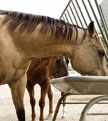 Poster featuring the photograph Peeking Pony by Lorraine Devon Wilke