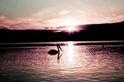 Poster featuring the photograph Pelican At Sunset. by Carole Hinding