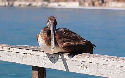 Pelican Taking A Break Poster