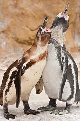 Penguin Poster by Tom Gowanlock