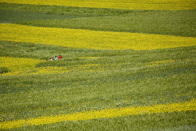 People In A Rapeseed Field Poster