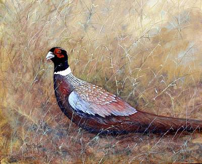 Pheasant In The Grass Poster