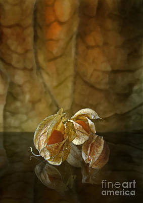 Poster featuring the digital art Physalis by Johnny Hildingsson