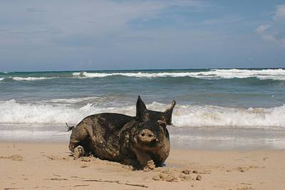 Pig In Paradise Poster