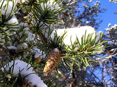 Pine Cone In Winter Poster