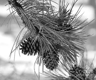 Pine Cones Poster by Dorrene BrownButterfield