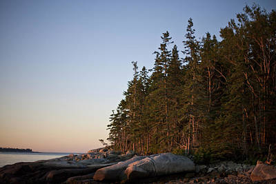 Pine Trees Along The Rocky Coastline Poster