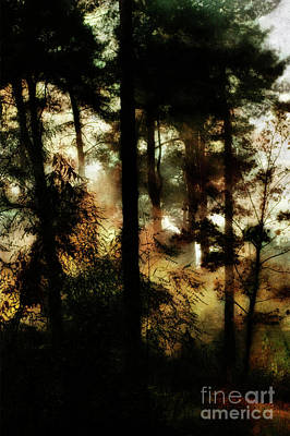 Pine Trees Poster by Dariusz Gudowicz