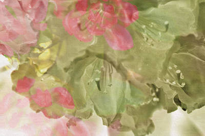 Pink And Sage Rhodie Poster by Bonnie Bruno