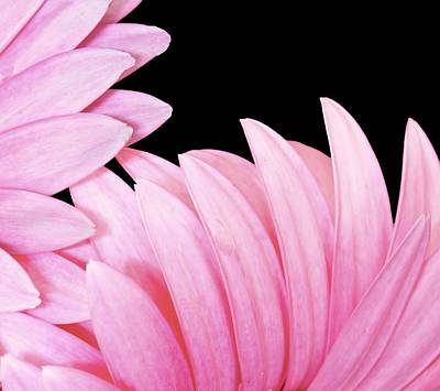 Pink Fan Poster by Nancie Rowan