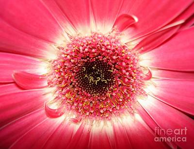 Poster featuring the photograph Pink Gerbera Daisy Close-up by Kerri Mortenson