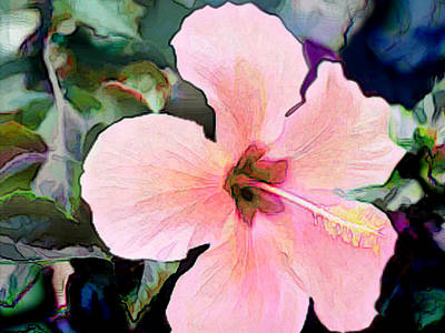 Pink Hibiscus Blossom Poster