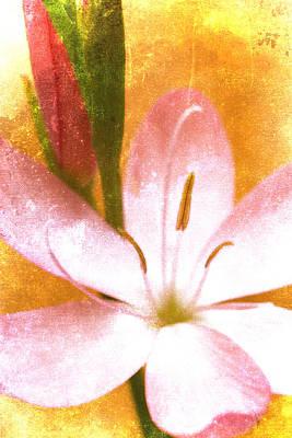 Pink Gladiolus On Orange Poster