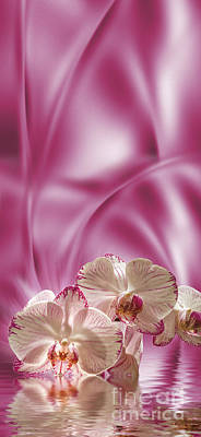 Poster featuring the digital art Pink Orchid by Johnny Hildingsson