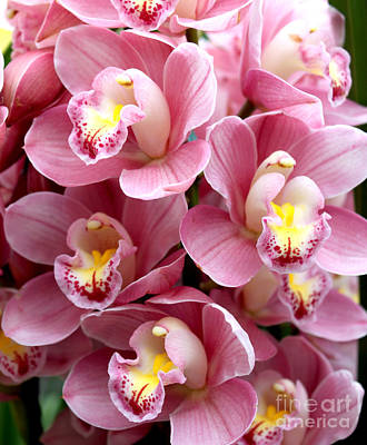 Poster featuring the photograph Pink Orchids by Debbie Hart