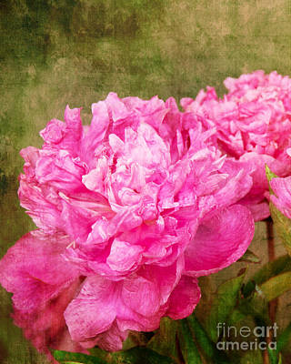 Pink Peony Texture 3 Poster