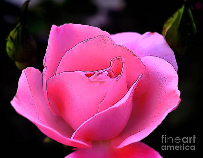 Poster featuring the photograph Pink Rose Day by Clayton Bruster