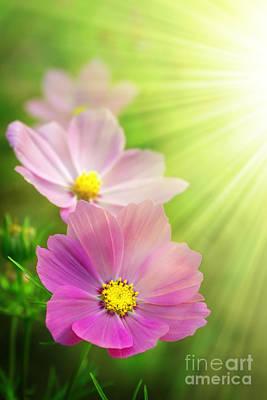 Pink Spring Poster