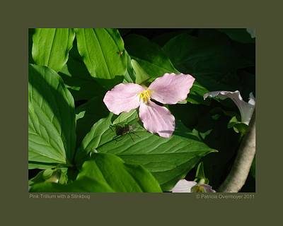 Poster featuring the photograph Pink Trillium Witha Stinkbug by Patricia Overmoyer