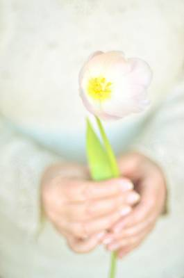 Pink Tulip In Womans Hands Poster