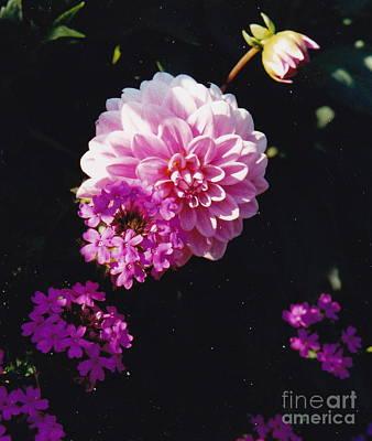 Pinkish Purplish Poster