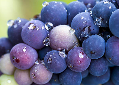 Pinot Noir Grapes Poster