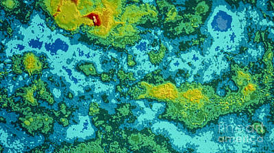Pioneer-venus Radar Map Of The Surface Poster by NASA / Science Source