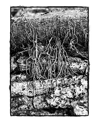 Poster featuring the photograph Poison Ivy Roots by Judi Bagwell