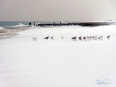 Polar Bird Club Poster