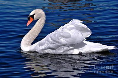 Pond Beauty  Poster