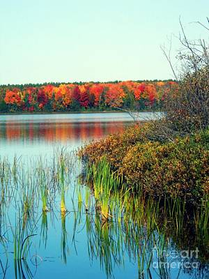 Pond In The Woods In Autumn Poster