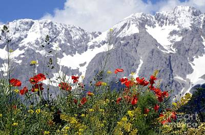 Poppy Flowers Under The Mountains Poster