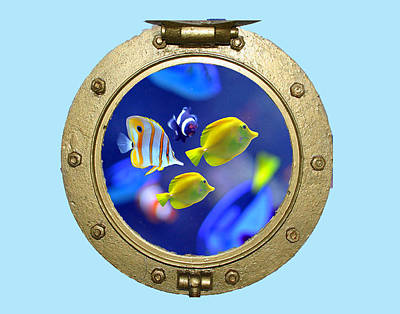 Porthole Of Fish Poster