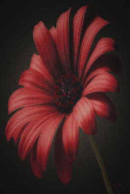Portrait Of A Daisy Poster by Tom York Images