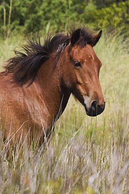 Portrait Of A Spanish Mustang Poster