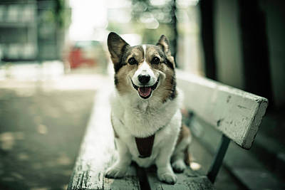 Portrait Of Dog Poster