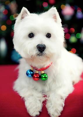 Portrait Of Puppy Poster