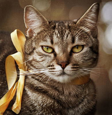 Portrait Of Tabby Cat With Yellow Ribbon Poster by by Sigi Kolbe