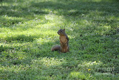 Posing Squirrel Poster