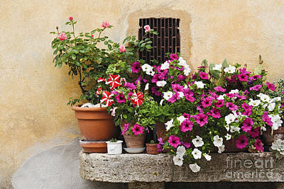 Potted Plants On Stone Bench Poster