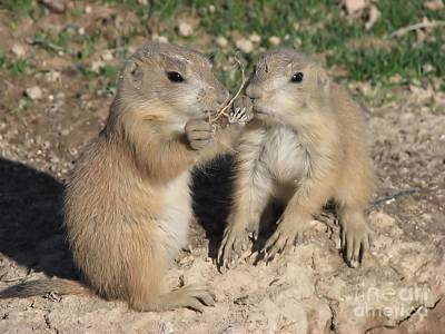 Poster featuring the photograph Prairie Dog Duo by Michelle H
