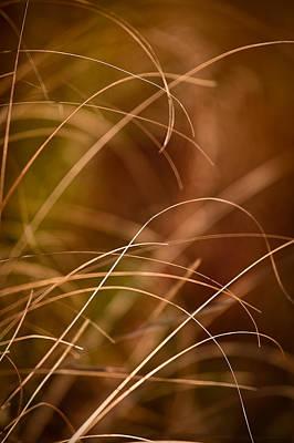 Prairie Grasses Number 4 Poster by Steve Gadomski