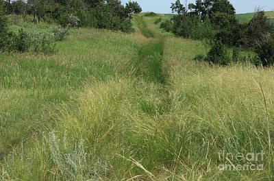 Prairie Trail In High Grass Poster
