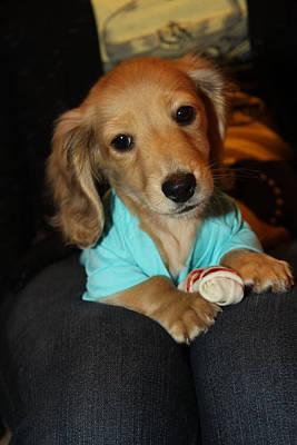 Precious Puppy Poster