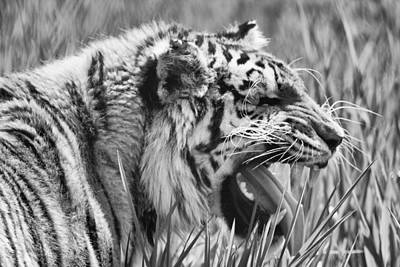 Predator Poster by Naman Imagery