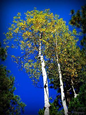Prescott Fall Aspen Canopies Poster