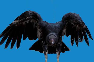 Pretty Bird Not Poster
